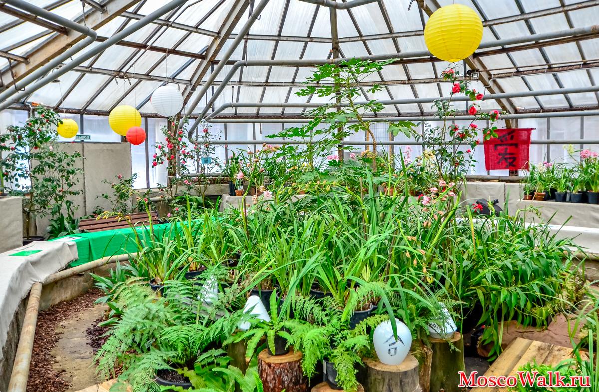 Живые цветы в оранжерее парках букет на свадьбу санкт-петербург цена