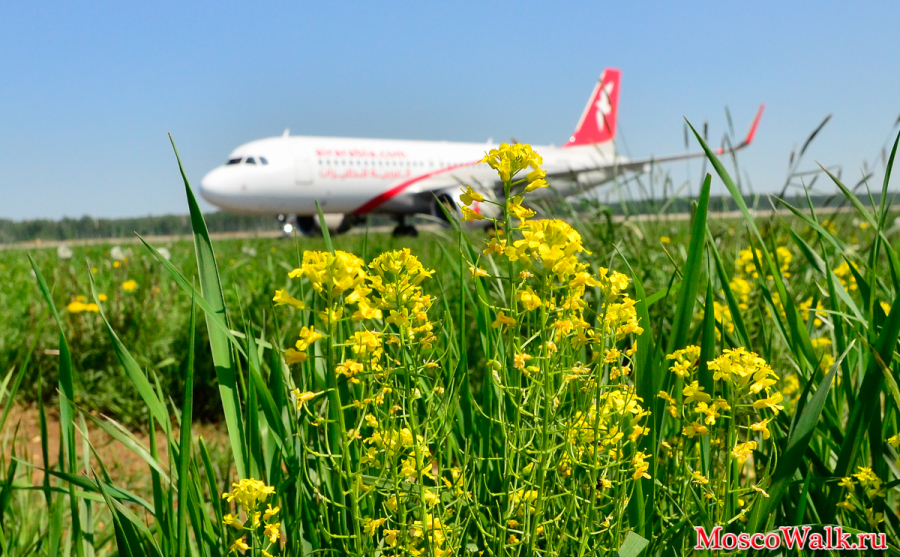 Airbus A-320 Air Arabia